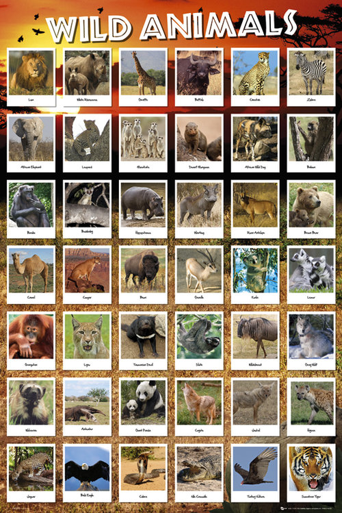 Póster Animales 128794